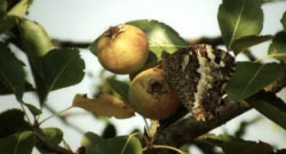 Trullo Adagio – Seasonal Fruit