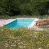 Wild flowers by pool