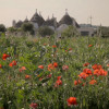 Puglia, Italy: readers' tips, recommendations and travel advice (from The Telegraph, 21/12/12)