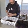 Ricci – Sea Urchins, a delicacy in Puglia