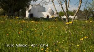 Trullo Adagio Wild-Flowers